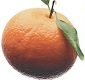 mandarinka.jpg
